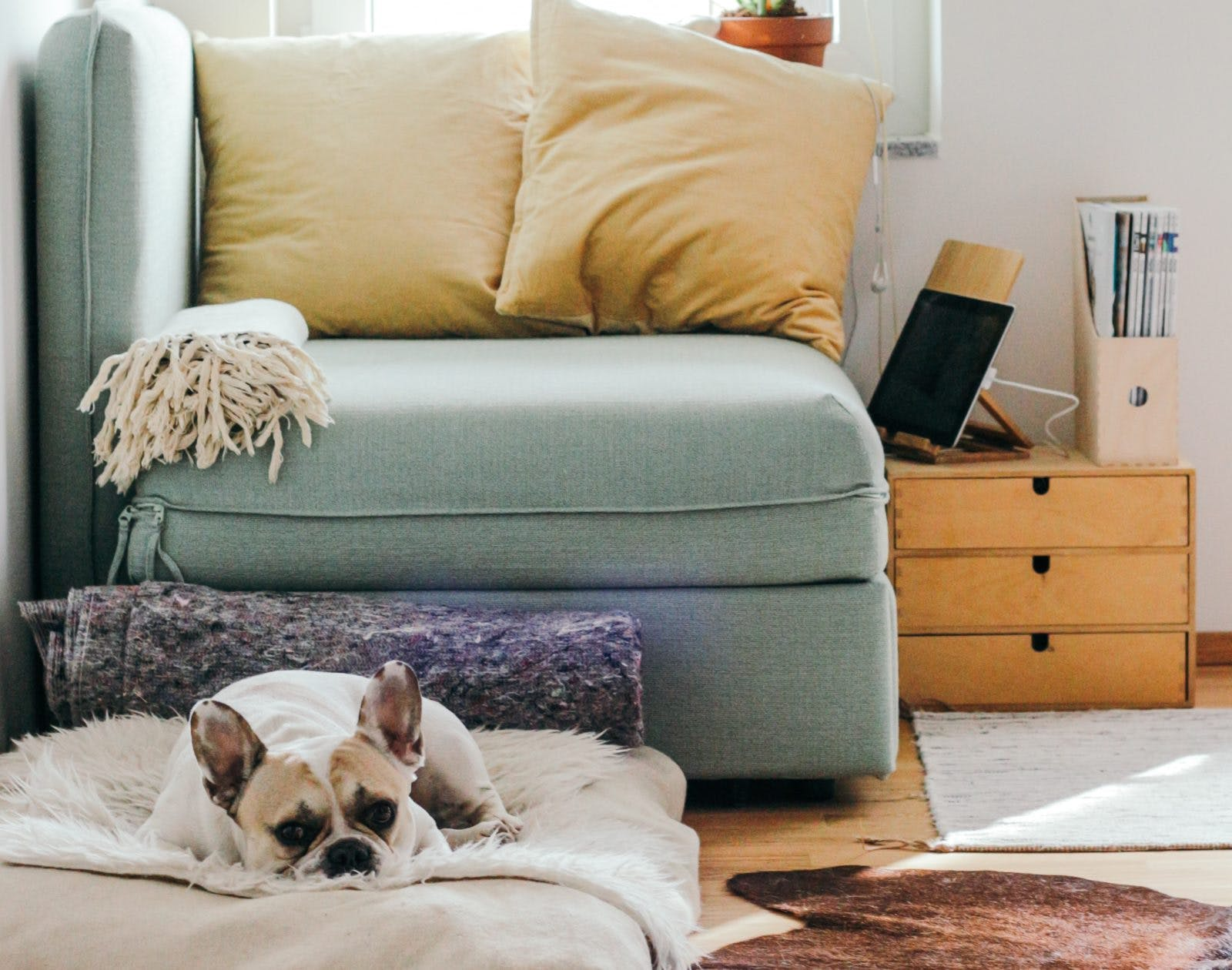 How to Keep Your Home Clean with Pets - The Property Source Group