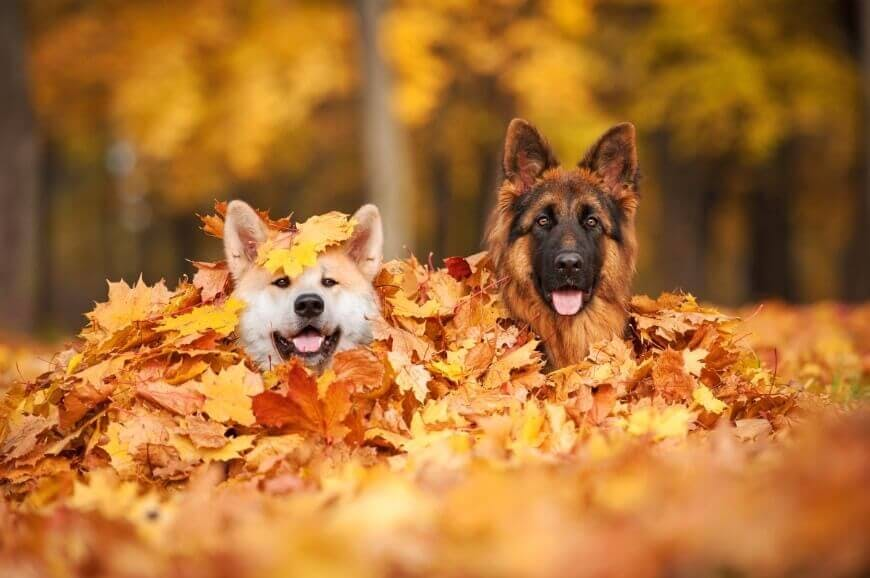 dog parks in langley